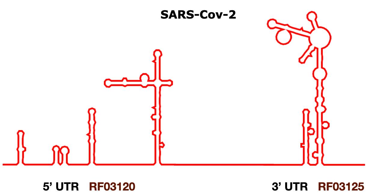SARS-Cov-2 UTRs